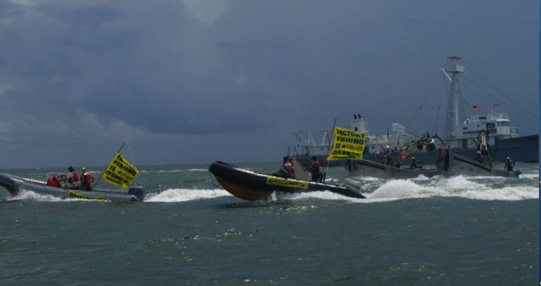 Low Res Greenpeace photo.jpg
