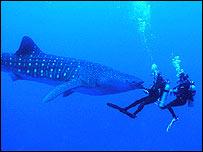 _41225812_shark2203.jpg