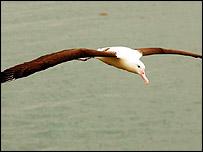 _41079077_albatross203_pa.jpg