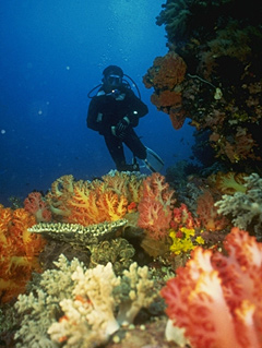 diver_redcoral.jpg