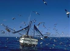 shrimping.jpg