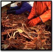 snow-crab-fisherman.jpg