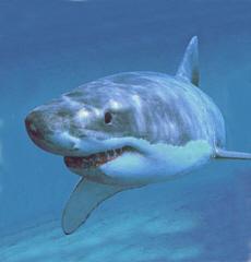 shark-gw03-230.jpg